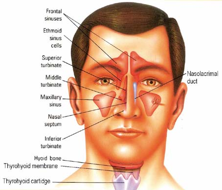 Sinusitis – Medical Blog
